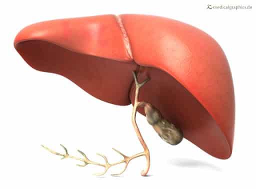 liver hindi yakrat